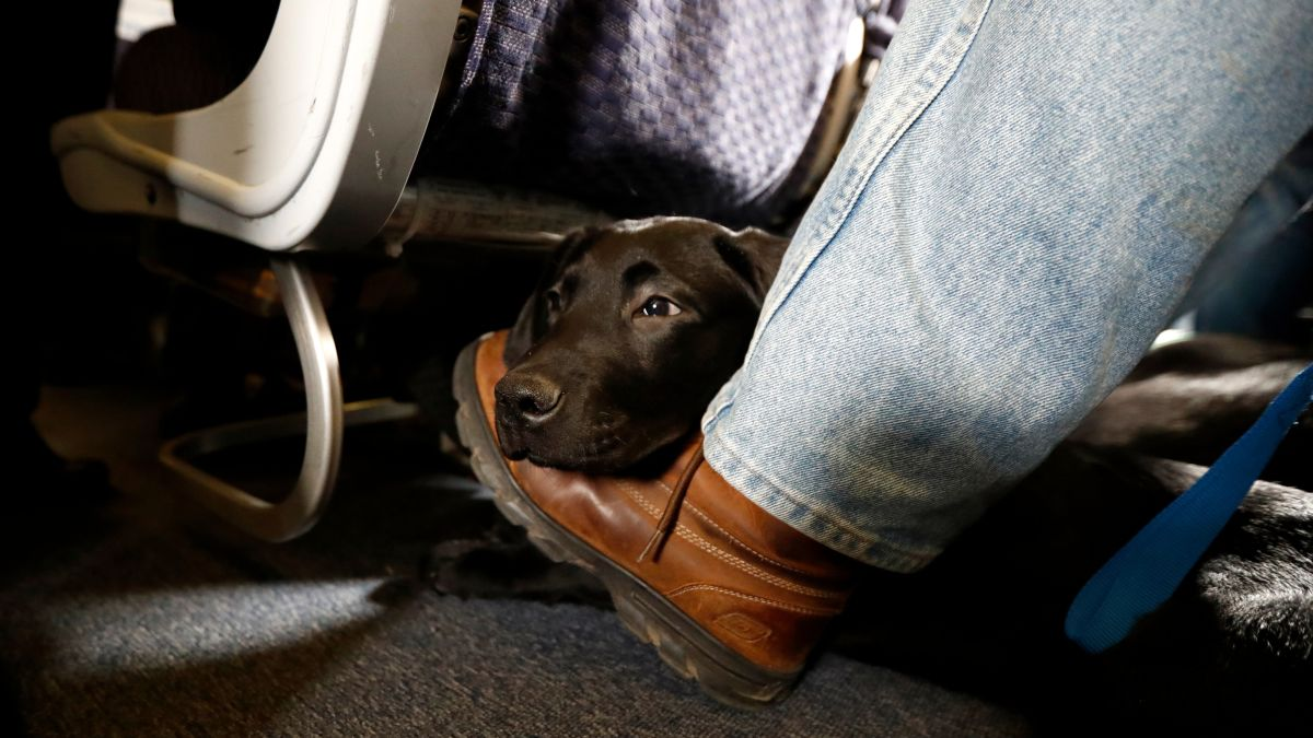 "Alaska Airlines bans ""emotional support"" animals starting January 11"